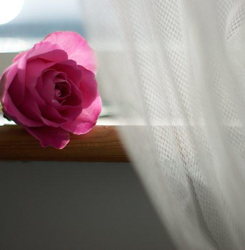 20210312184404_9-flower-3229869